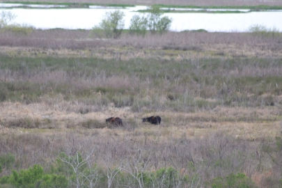 We saw wild horses. They just schmoozed for a while.